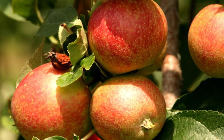 Biologische appelstroop maakt brood pas echt speciaal